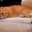 警視庁いきもの係の猫のナオミの種類や年齢は?購入値段について!